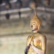 Schmetterling-Meditation: Yoga meets ZEN